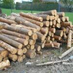 drewno sosna